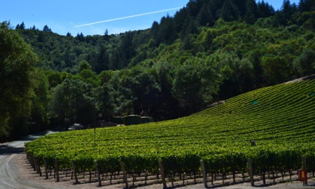 Behind the Bottle: Grace Family Vineyards