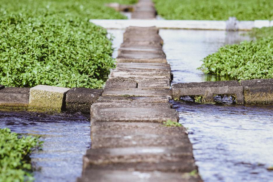 Watercress: Explained